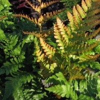 Four Feisty Ferns