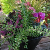 Fall and Winter Containers