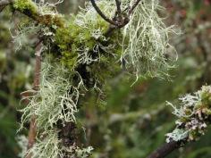 Moss and Lichen