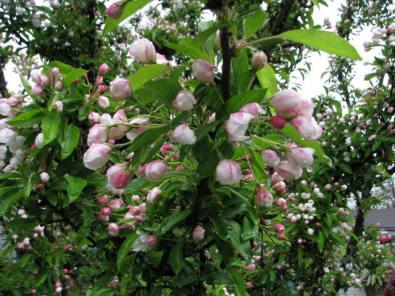 Adirondack April Flowers