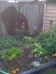 Spring Vegetable Garden