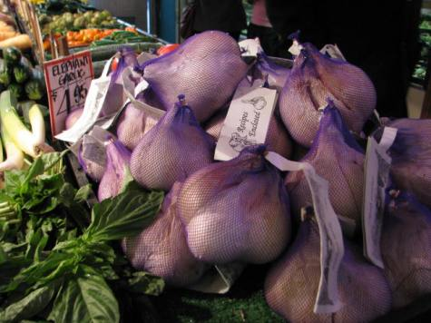 Giant garlic