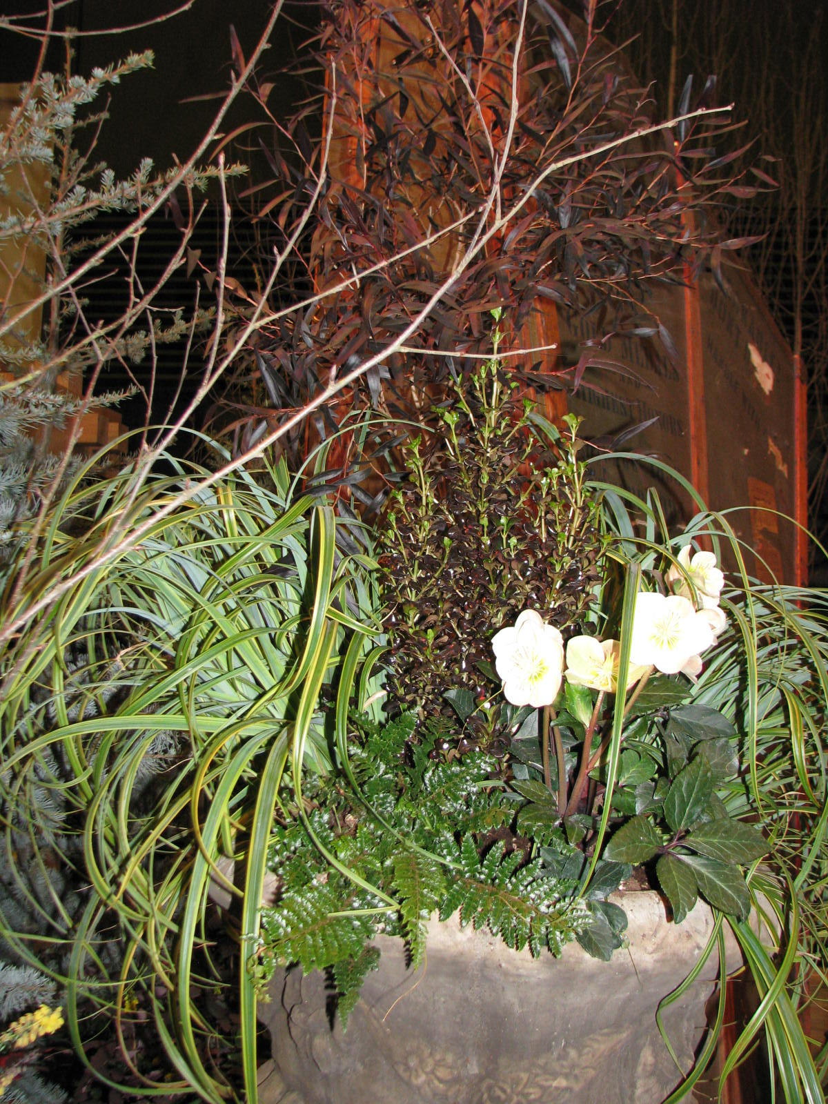 Plant Picks From the NW Flower and Garden Show – Rainyleaf