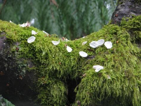 Petals and Moss