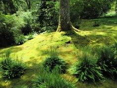 Golden Moss Garden
