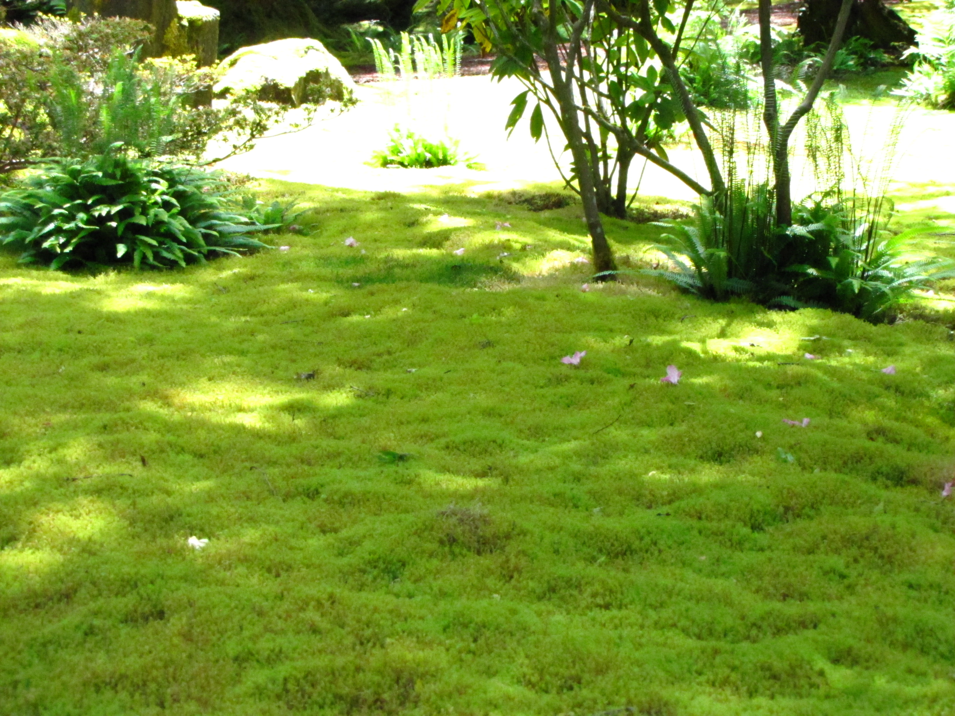 Moss garden at bloedel reserve rainyleaf for Garden grass