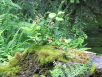Salal Island in a Sea of Moss