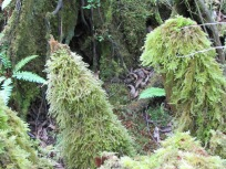A waterfall of moss