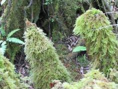 A waterfall of moss