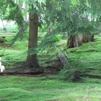 Moss Garden at Bloedel Reserve