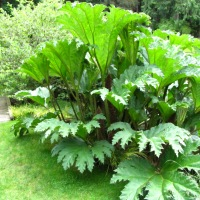 The Twelfth Day of Christmas---Big, Bold Plants