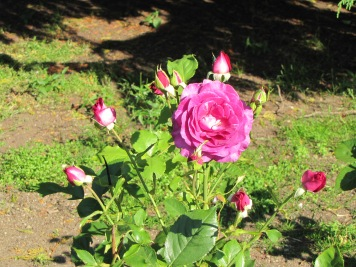 Melody Parfumee Grandiflora