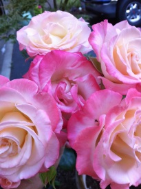 Roses in Costume