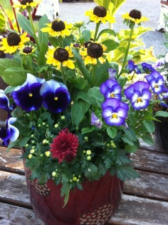 Rudbeckia and Pansies