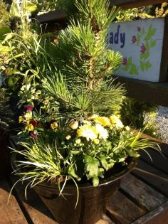 Hakuho Pine and Grasses
