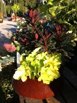 Heuchera and Euphorbia