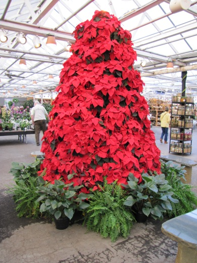 Poinsettia 'tree'