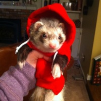 Make Moles Disappear With Ferrets!