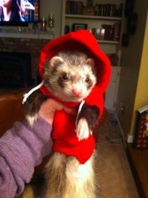 Ferret in Hoodie