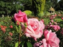 Pink Favorite