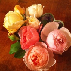 David Austin roses....heaven!