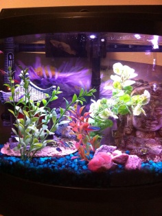 My fishtank with neon tetras, I like the sound of bubbles and the soft glow at night.