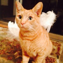 Our cat Sprite, not really an angel, he killed my parakeet this year, evil cat!