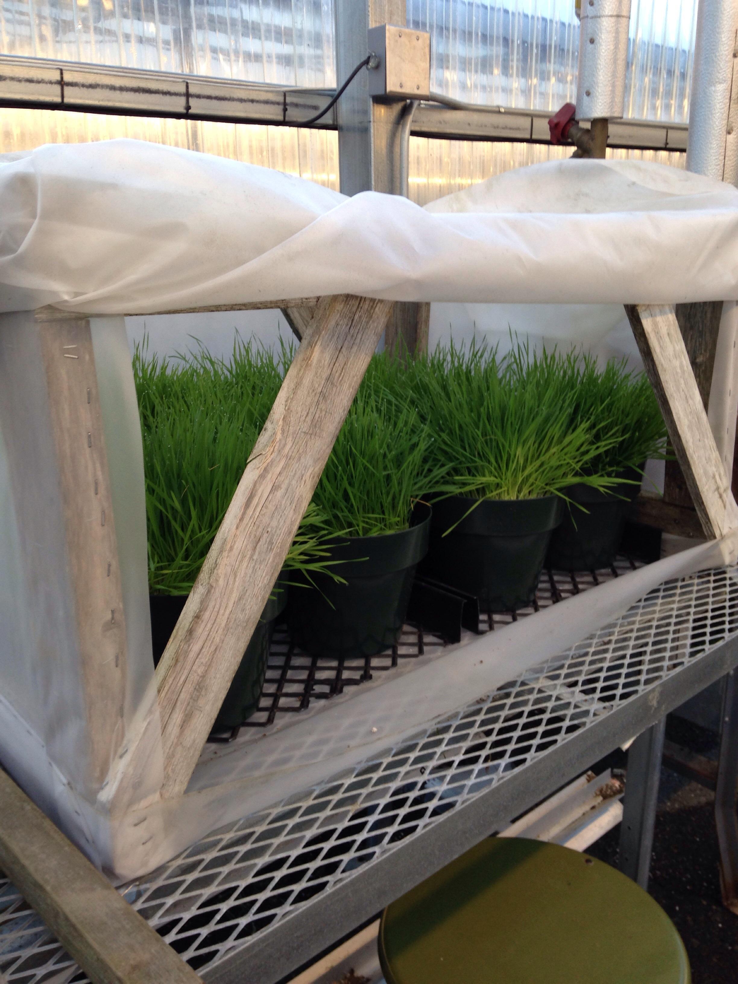 Good Plants Grow Inside