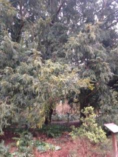 Twenty foot tree